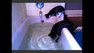 Cat Falls Into Bath Tub!