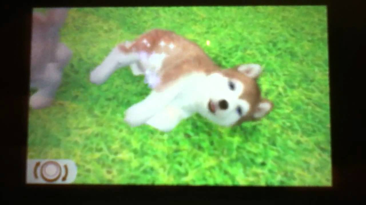 All The Breeds Of Dogs In Nintendogs