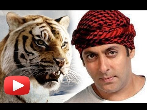 Salman Khans Film Sher Khan To Have A Special Tiger?[HD]