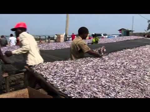 Un projet à succès de la FAO au Burundi: ''Appui à la technologie post-capture de poisson''