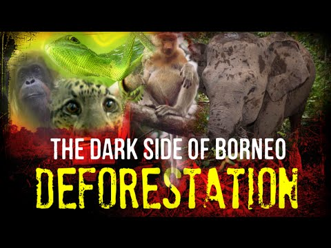 DEFORESTATION - The Dark Side of Borneo