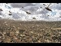 SWARMS OF MILLIONS OF LOCUST PLAGUE CAIRO, EGYPT AHEAD OF PASSOVER (MAR 4, 2013)