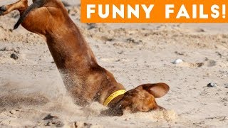 Funniest Pet Fails Compilation August 2018 | Funny Pet Videos