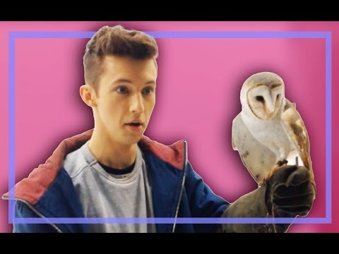 OH MY GOD AN OWL (Behind the Scenes of HLP pt 2)