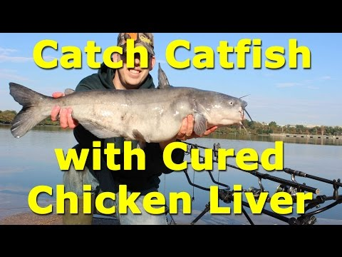 Awesome catfish bait - cured chicken liver on an egg loop knot