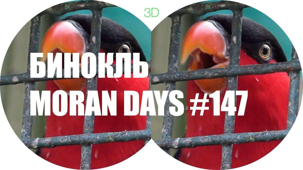 Бинокль Moran Day - 147