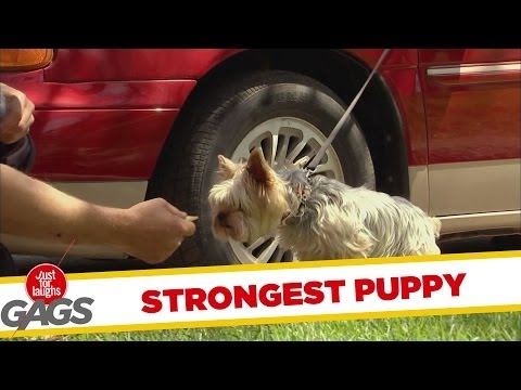 Strongest puppy in the WORLD