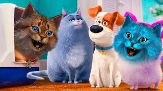 Приключения СОБАКИ МАКСА из Мультика Тайная Жизнь Домашних Животных 2! Котик Игроман Котёнок Лайк