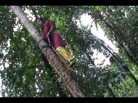 Mechanised coconut climbing by women.wmv - YouTube