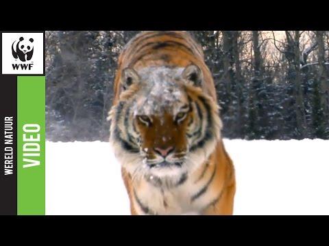 Gouden Loekie 2012 – Wildlife Crime (WNF)