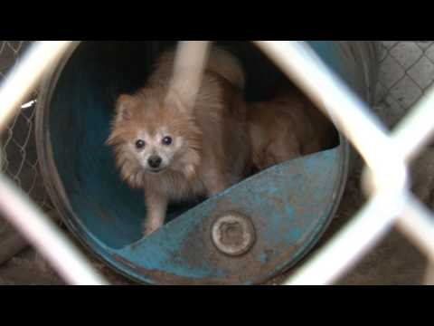 Stop Puppy Mills in North Carolina