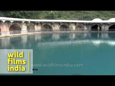 Rainbow trouts Vernag water spring at Mughal Garden Verinag Jammu & Kashmir 2