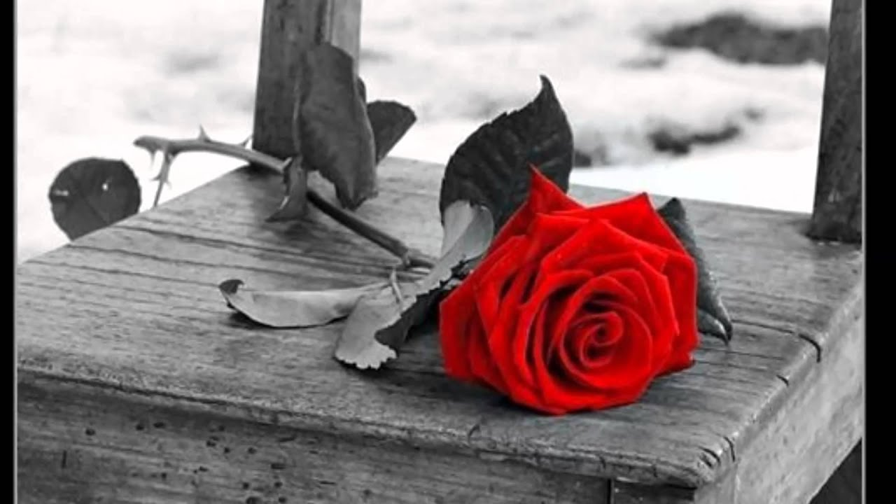 lloran las rosas cristian castro letra: