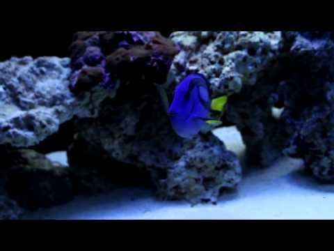 Wide 100 Gallon FOWLR Saltwater Aquarium HD