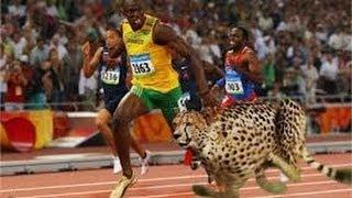 Usain Bolt Races Cheetah On Track, Amazing!!