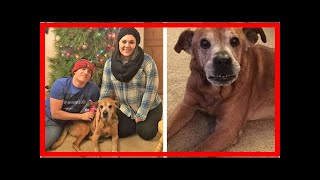| Dog Rescue Stories18-Year-Old Dog Celebrates One Year With The Couple Who Rescued Him Last Chri...