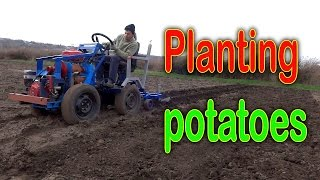 Planting potatoes using a garden tractor