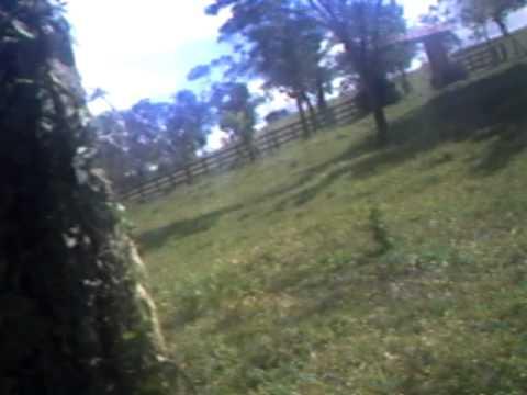 Cavalo X Vaca video