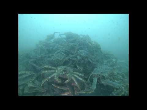 201304-28 Dive-Auke Rec-King Crab Ball
