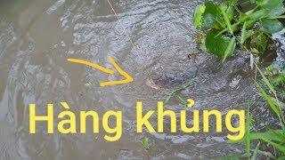 Cấm câu mồi này toàn dính cá bự. Mới buổi chiều thăm câu đả có cá khủng | Săn bắt SÓC TRĂNG