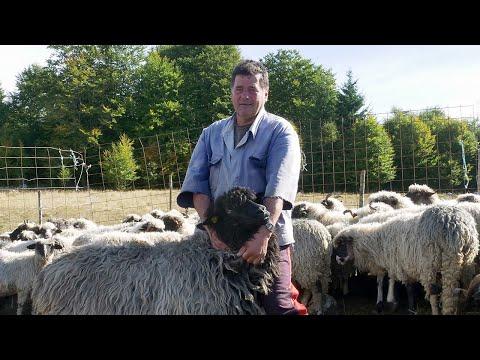 Bez žene nema uspjeha u ovčarstvu