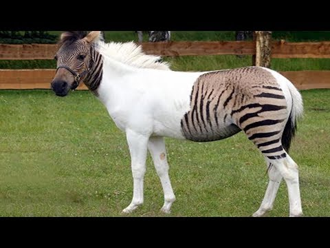 5 Animal Hybrids You Won't Believe Actually Exist!