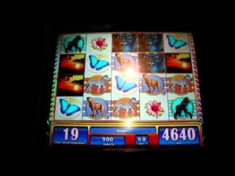 Wms slots gaming 2