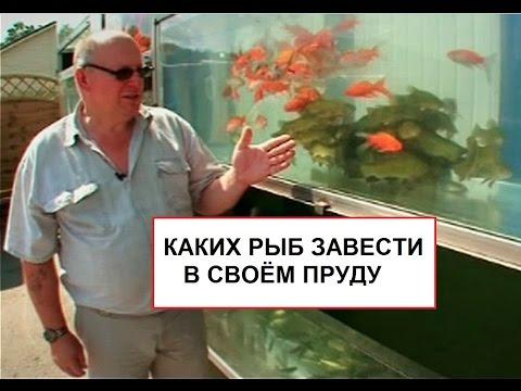 Каких рыб завести в своём пруду