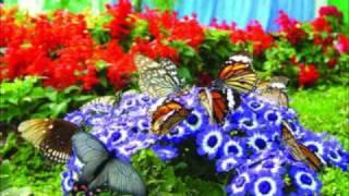 Gigi - Bunga Syurgawi