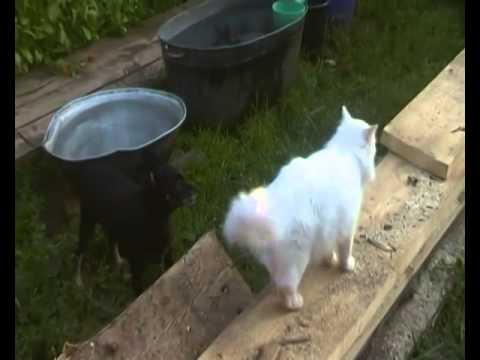 Приколы с кошками  ,собаками ,с животными  Приколы