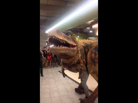 Hilarious dinosaur prank in Groupon's office