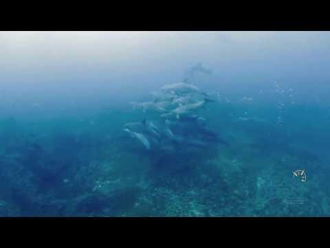 Deep Water Spearfishing Freediving in Deep Water