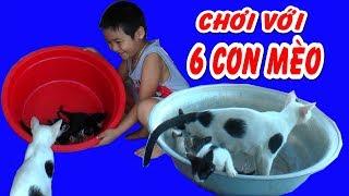 Cách bắt mèo hài hước của bé Dương ❤Kênh Em Bé