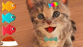 Little Kitten My Favorite Cat - Play Fun Kitten Pet Care Kids Game - Fun Educational Cartoon Games
