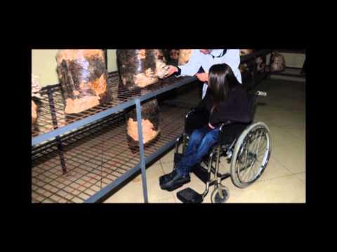 Bağcılar Belediyesi Engelliler Sarayı