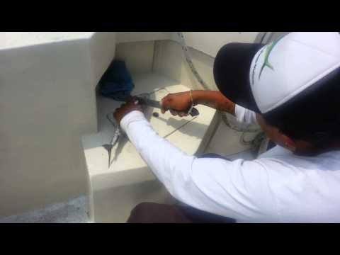 Puerto Vallarta Fishing Charters II. Fish caught