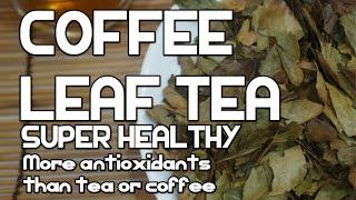የቡና ቅጠል ሻይ አሰራር - How To Make Coffee Leaf Tea