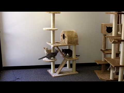 Phoenix cat tree by kitty mansions how to save money and for Do it yourself cat tower