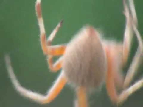 Building a Spider Web - 9/27/2012