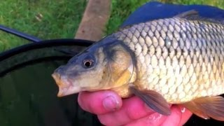 Carp Fishing With Pellet On The Pole - Part One