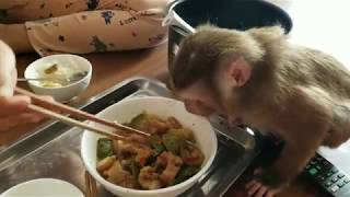 Monkey Baby Nui | Nui is very happy when she has a home