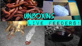 UNBOXING 1000+LIVE worms, setting them up, & feeding them to toad and turtles