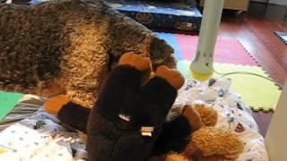 04-11-07 STINKY toy