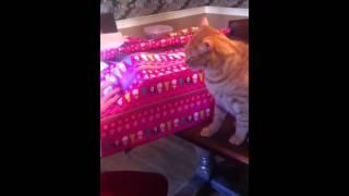 ¡Este regalo es del gatito!