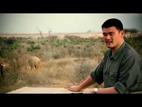 """""""What I Found"""" starring Yao Ming"""