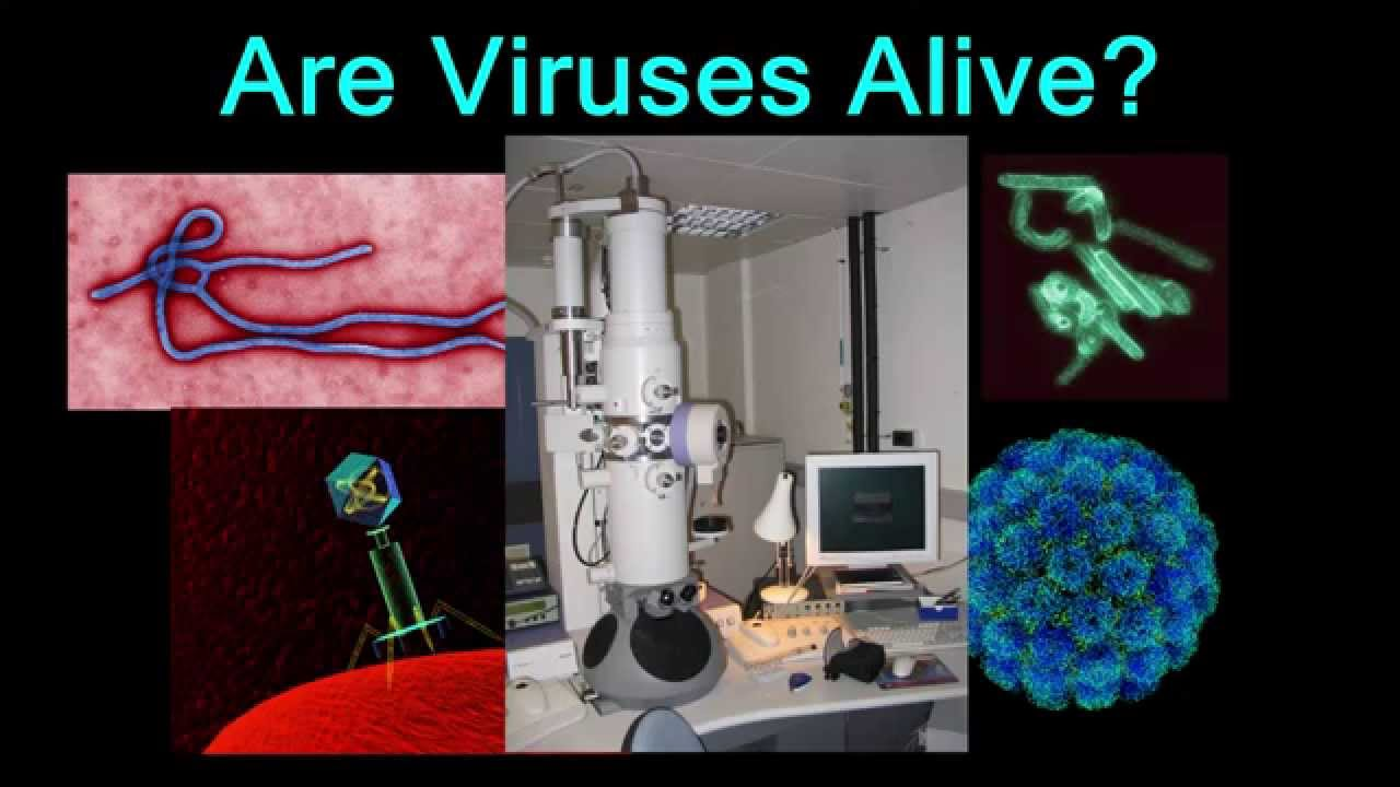 viruses are alive Viruses are alive, if only because life is a widespread system of evolving chemistry not everyone agrees with this distinction, based on the fact that, like rocks, viruses do not have self-generated or self-sustaining actions.