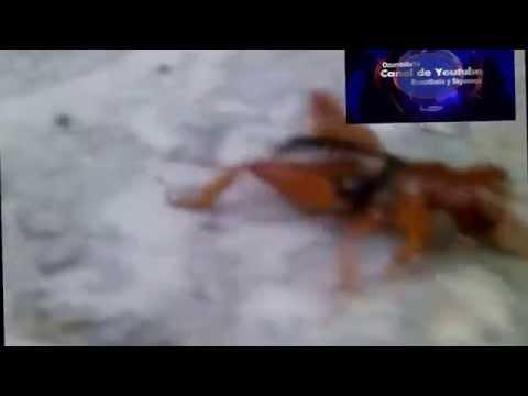 Conoce al insecto cara de niño