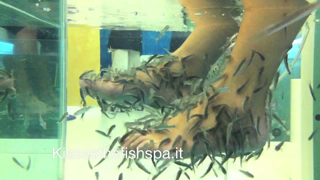 Fish pedicure fish manicure garra rufa italia youtube for Fish spa near me
