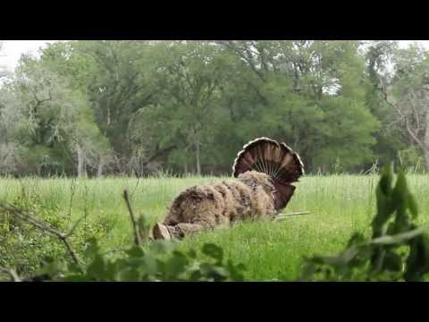 Lone Star Life: Texas Turkey Hunting - fanning gobblers in Bastrop County - 2013 season