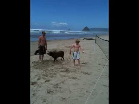 Cannon beach fun 7 Video
